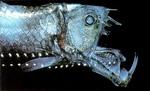 深海魚1.jpg