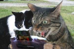 ゲーム猫.jpg