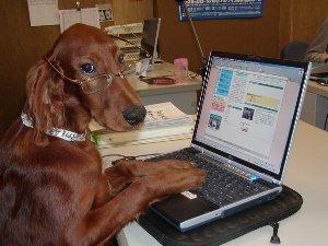 パソコン犬.jpg