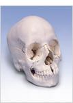 人体模型.jpg
