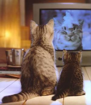 仲良し猫.jpg