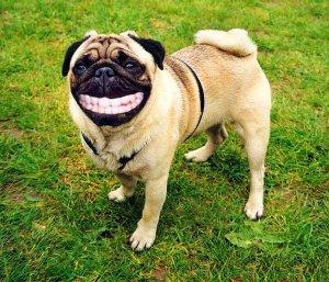 入れ歯犬.jpg